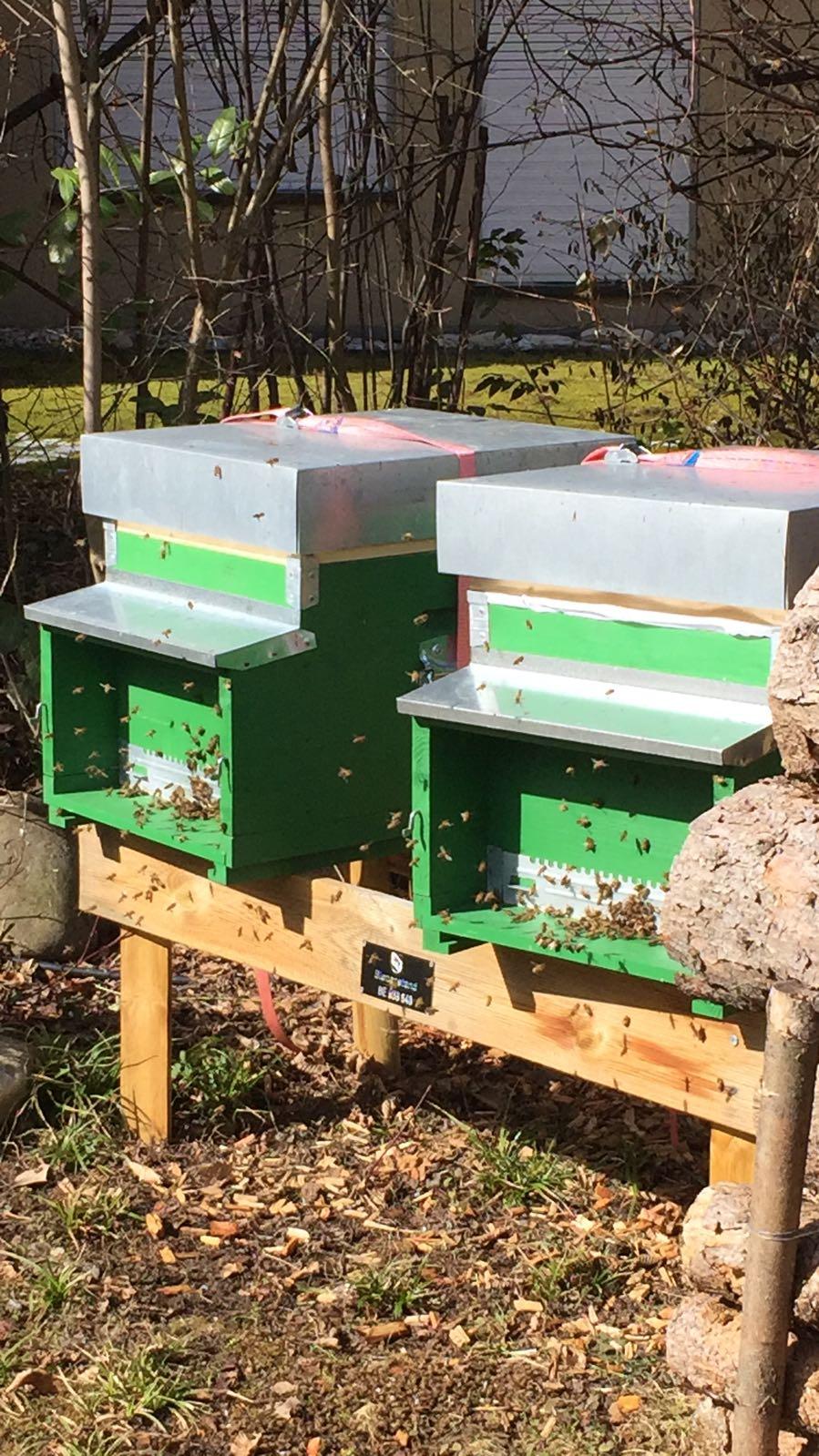 reger Bienenflug