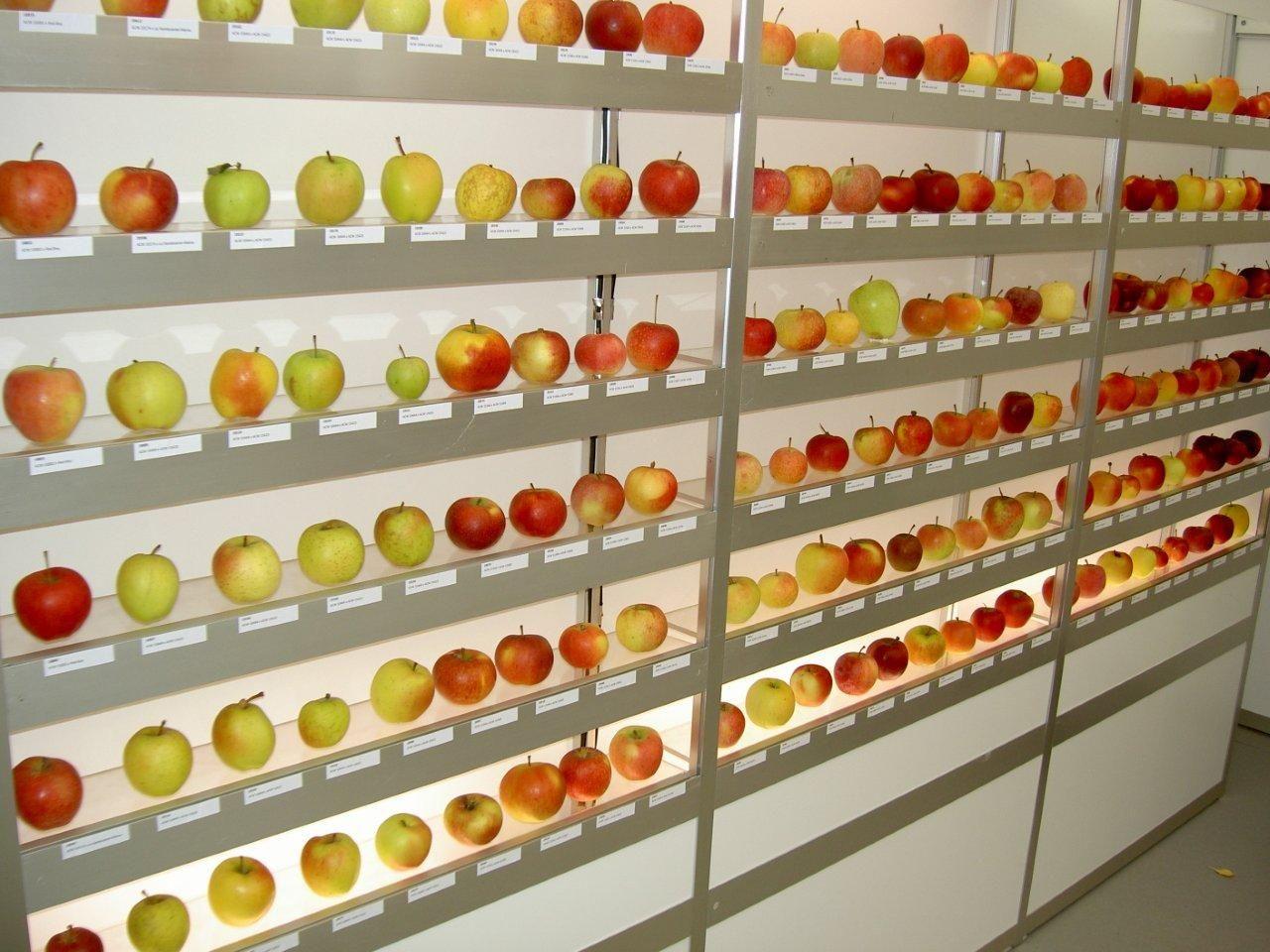 Obst Sortenvielfalt