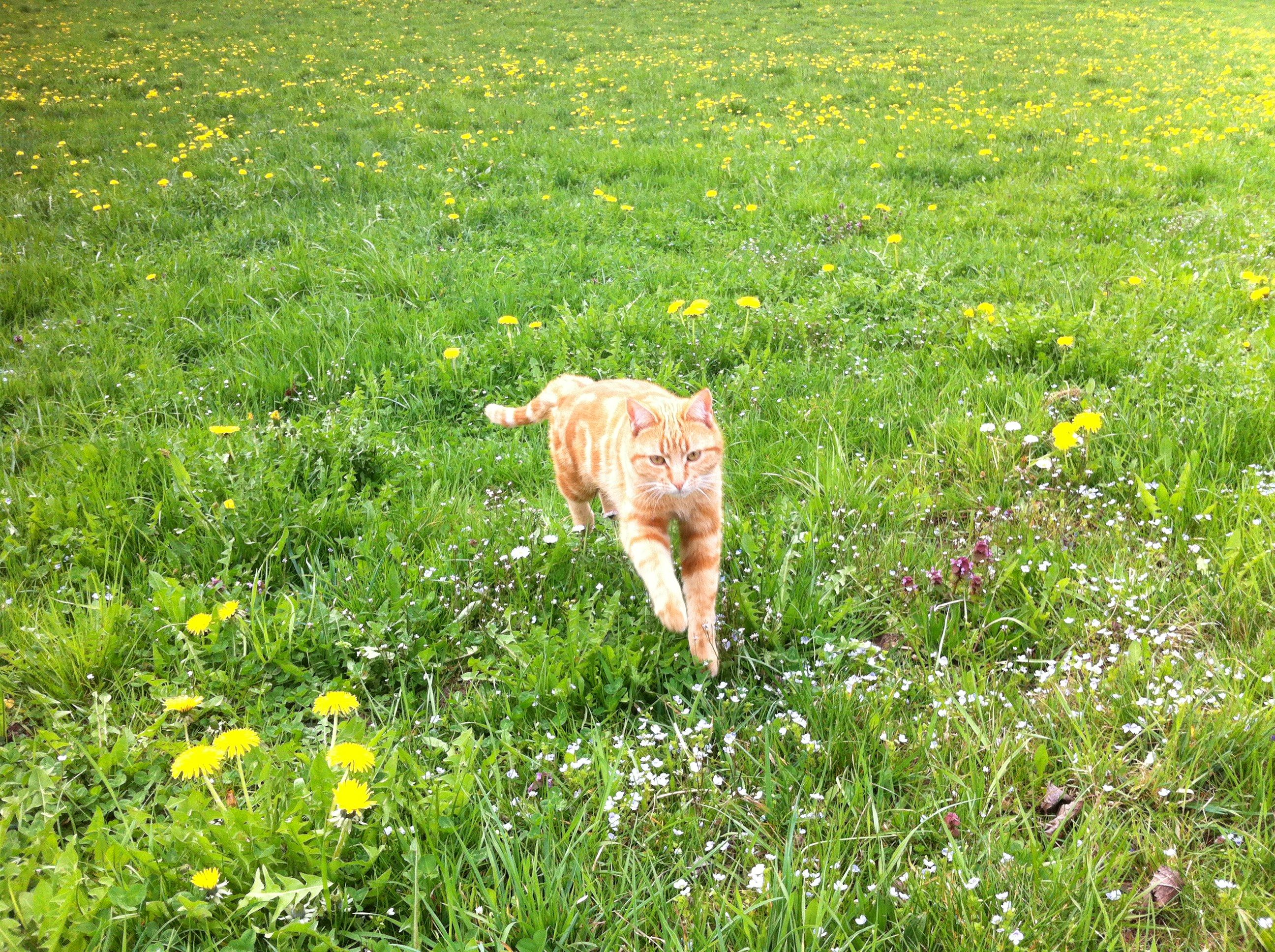 Tiere (1)